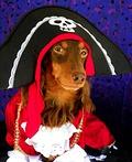 Ahoy, Matey! Costume