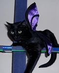 Bat Cat Costume
