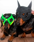 Batdog and Robin Costume