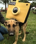 Camera Tripod Dog Costume