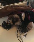 Cat Sparrow Costume