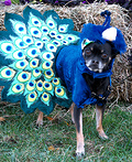 Charlie the Peacock Costume