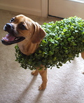 Chia Pet Slinky Costume