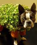 Echo the Chia Pet Costume