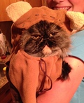 Ewok from Endor Costume