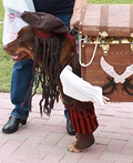 Jack Sparrow and his Pirate Helper Costume