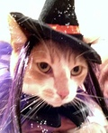 Kitty Witch Costume