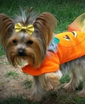 Li'l Pumpkin Costume