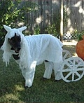 White Horse & Pumpkin Carriage Costume