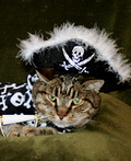 Muffin the Pirate Costume