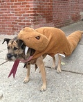 Rattlesnake Dog Costume