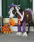 Gentle Carousel Miniature Therapy Horses Costume