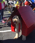 Snoopy The Flying Ace Costume
