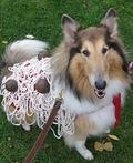 Spaghetti Dog Costume