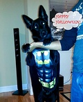 The Dark Knight Batman or Batdog Costume