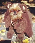 Walter as an Ewok Costume