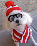 Woof! Where's Waldo Costume