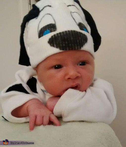 Noah's first Halloween, 101 Dalmatians Costume