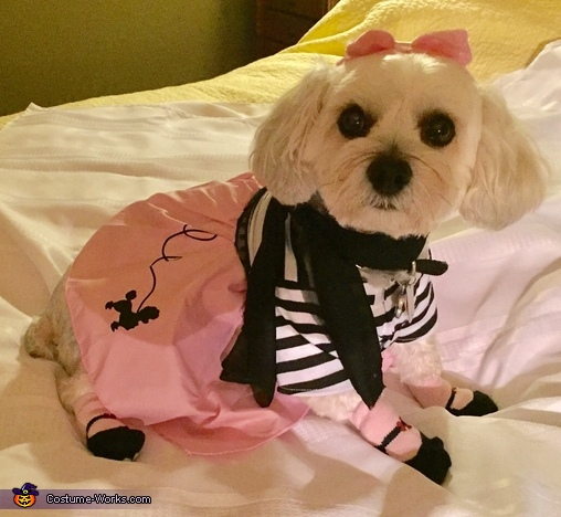 Callie in 50's Poodle Skirt Costume