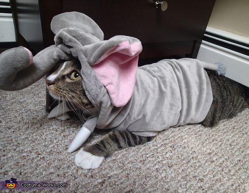 Millie the Cat wearing her Elephant Costume