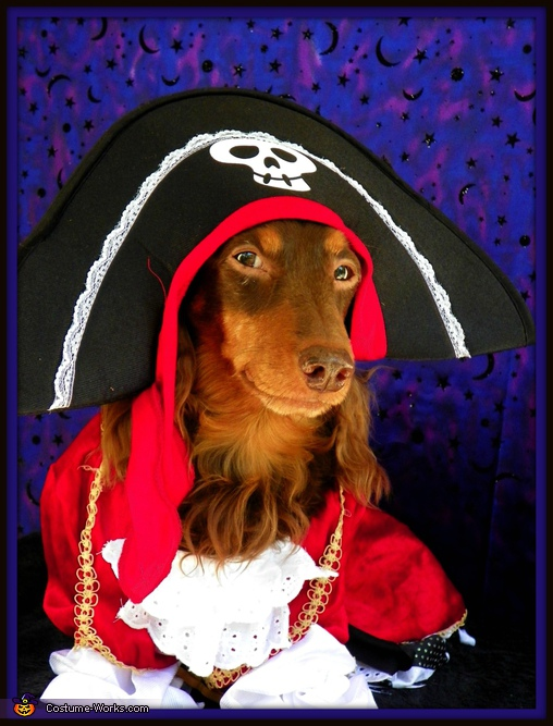 Ahoy, Matey! - Homemade costumes for pets