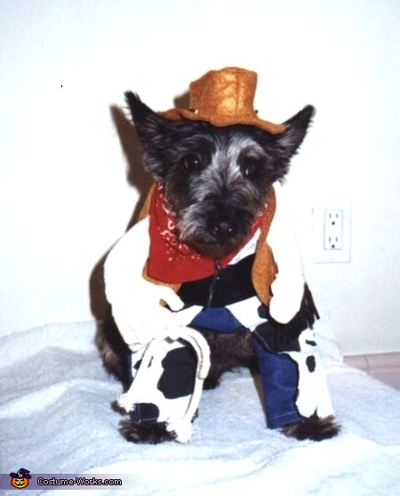 Ragtime Cowboy Al, Al and the Great Pumpkin Dog Costume