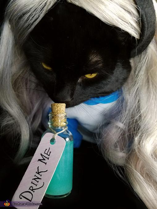 Alice In Wonderland Cat Homemade Costume