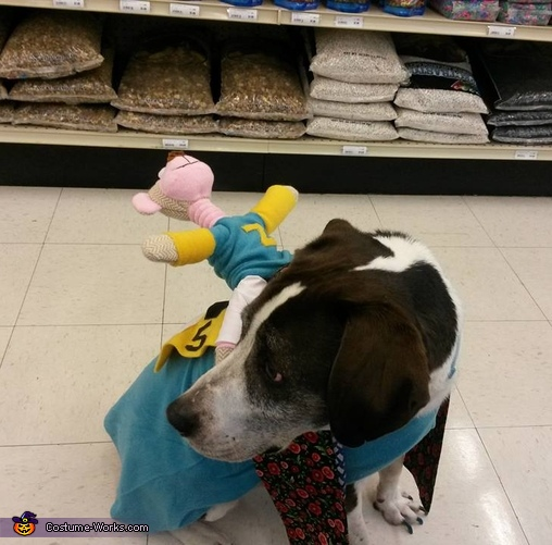 I know exactly who the good boy is!, American Pharoah Costume