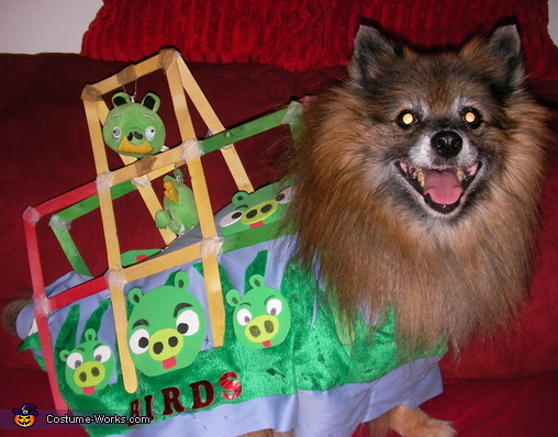Angry Bird Dog - Homemade costumes for pets