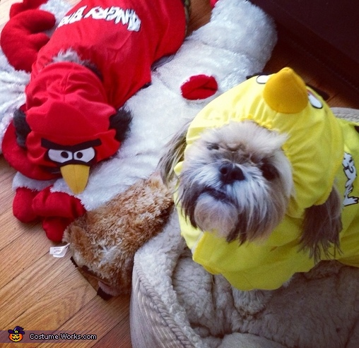 Bella and Spencer angry bird dogs Angry Birds Dog Costume & Angry Birds Dog Costumes - Photo 2/5