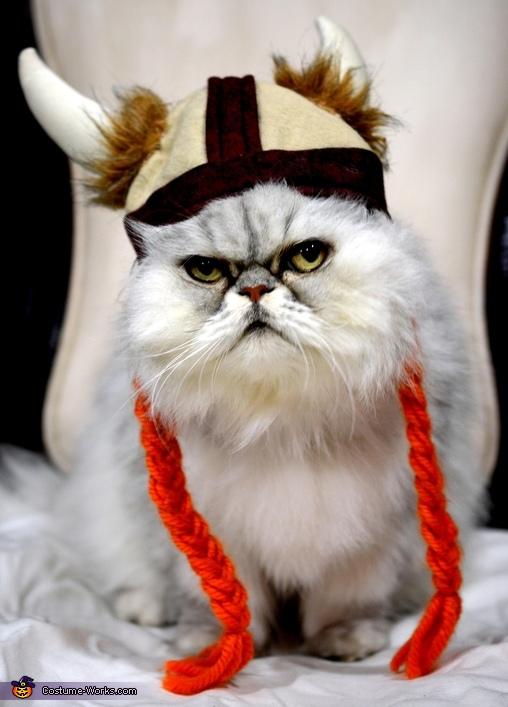 Angry Viking Cat Costume