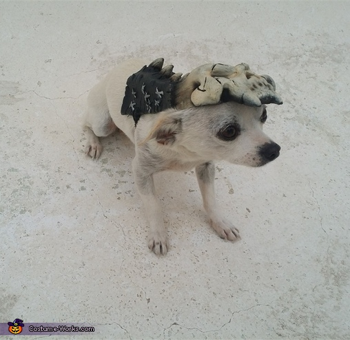 Army of Darkness Dog Homemade Costume