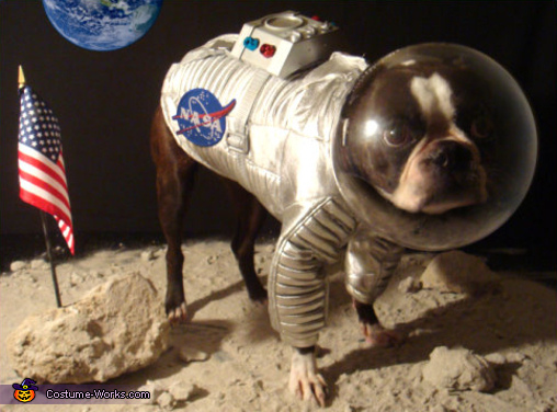 Astromutt - Homemade costumes for pets
