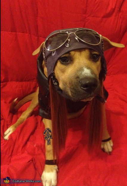 Axl Rose - Halloween Costume Ideas for Dogs