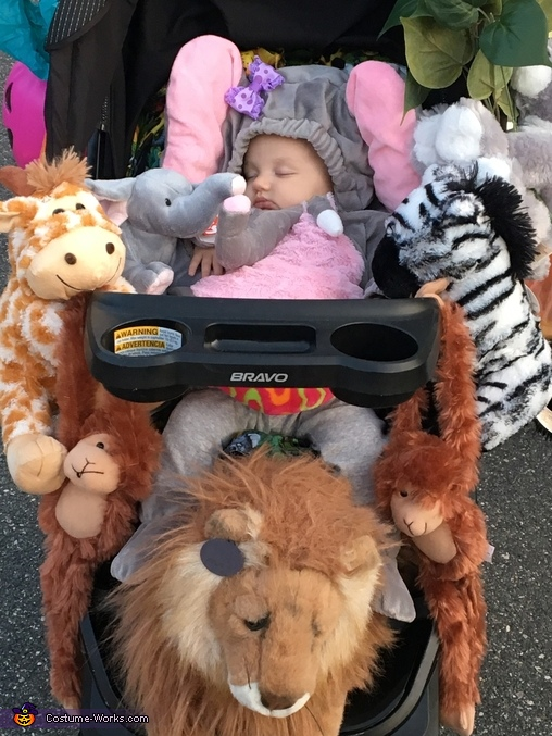 Baby elephant and jungle friends!, Baby Elephant and the Safari Costume