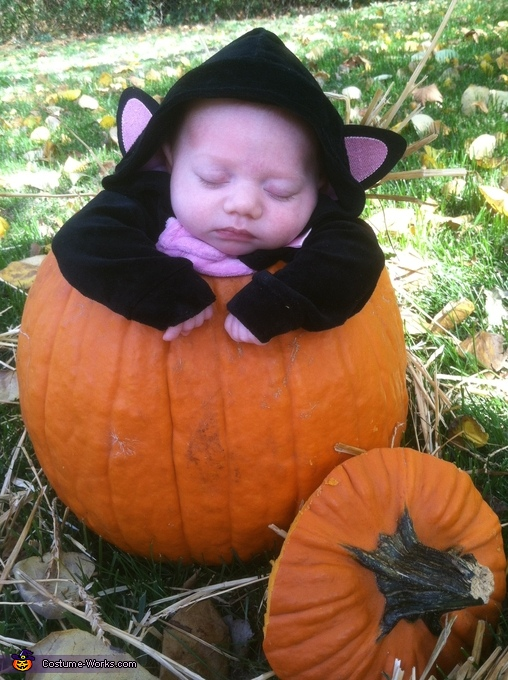 Hide and seek baby kitty, Baby Kitty in a Pumpkin Costume