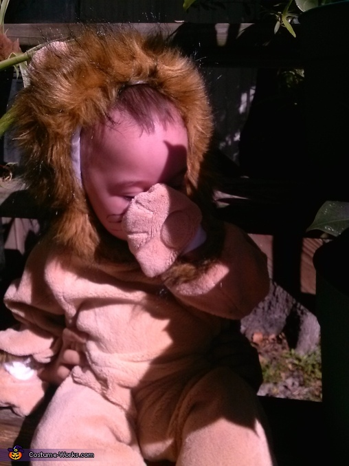 Shy baby lion, Baby Lion Costume