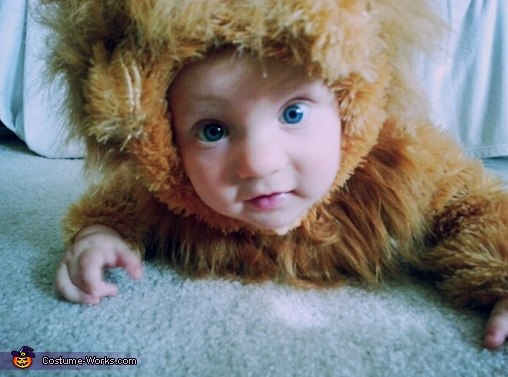 rawr!, Baby Lion Costume