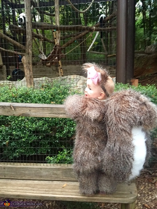 Squirrel visits the zoo, Baby Squirrel Costume