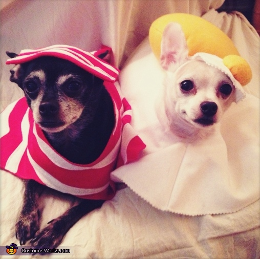Bacon & Eggs - Homemade costumes for pets