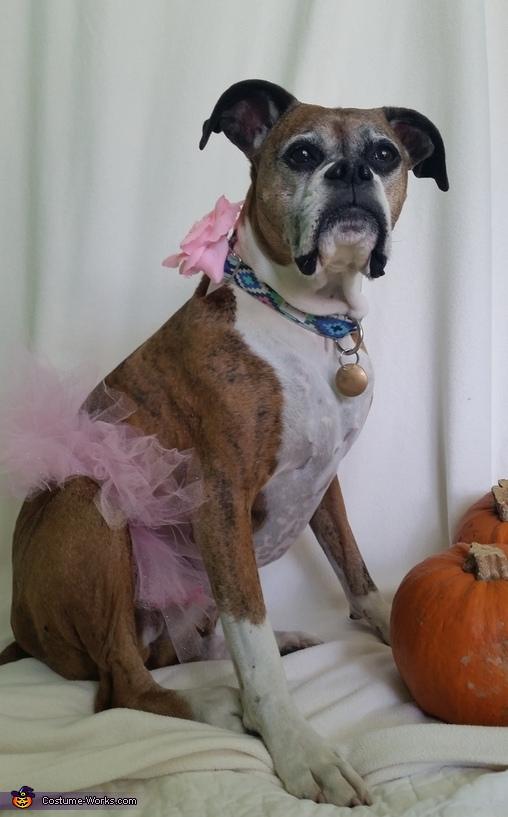 Ballerina Dog Costume