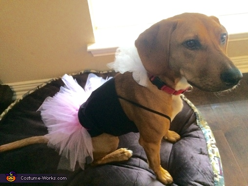 Ballerina Dog Costume