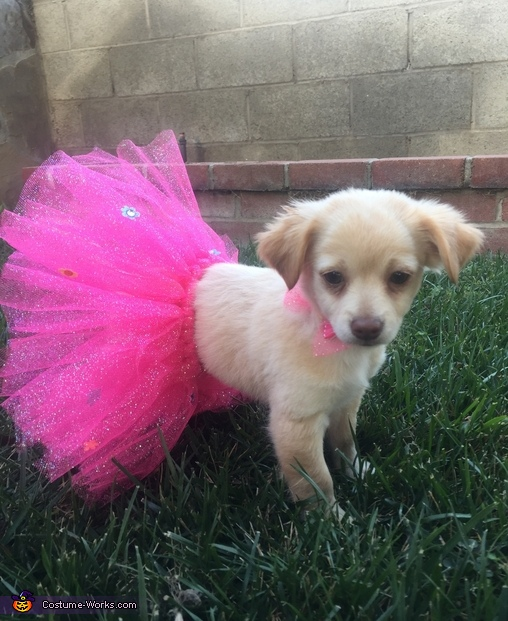 Ballerina Puppy Costume