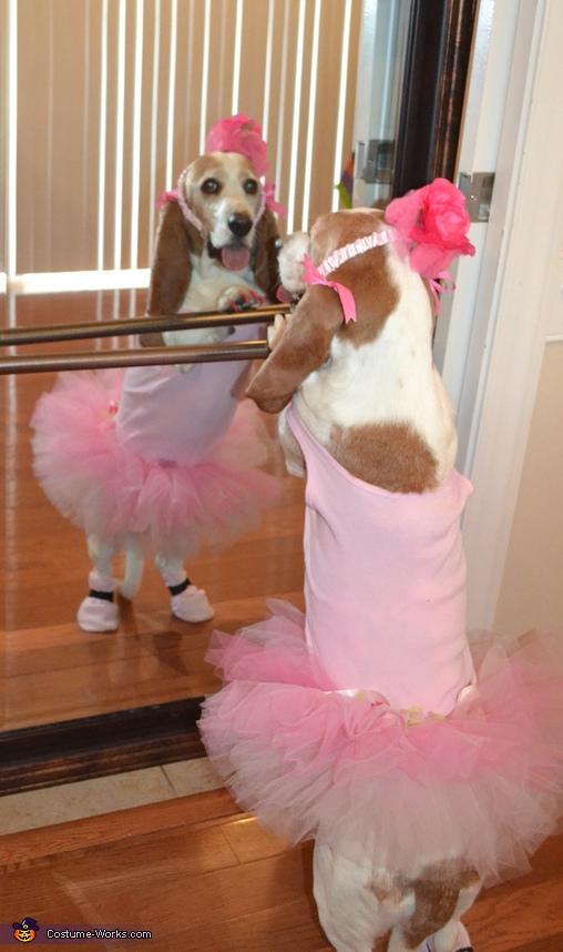Ballerina Molly, Basset Ballerinas Costume