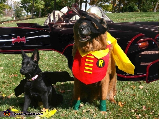 Bat Dog and Robin Homemade Costume