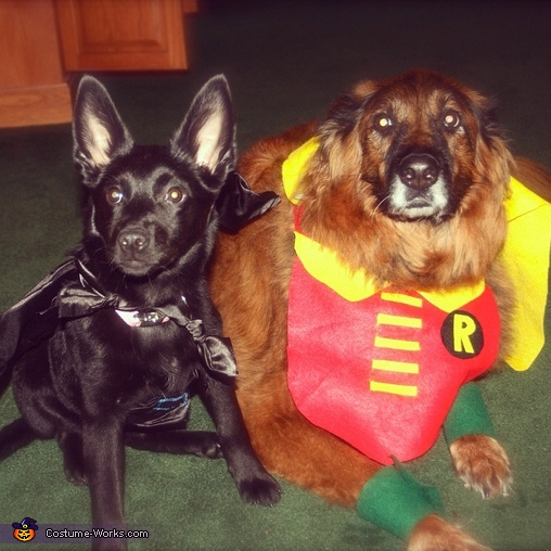 Bat Dog and Robin Costume