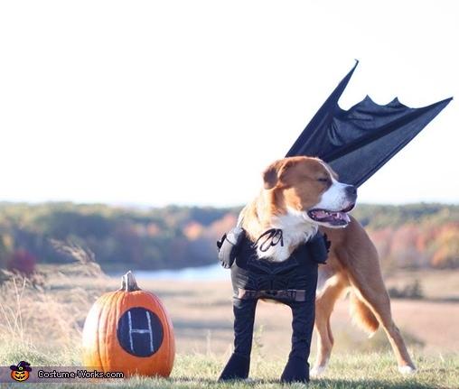 Batdog Costume