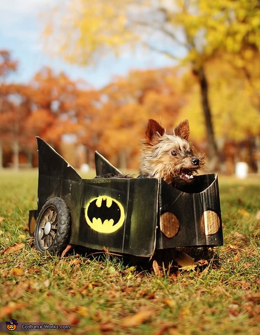 Batman in Batmobile Dog Costume