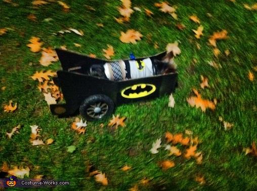 Bat Signal, Batman in Batmobile Dog Costume