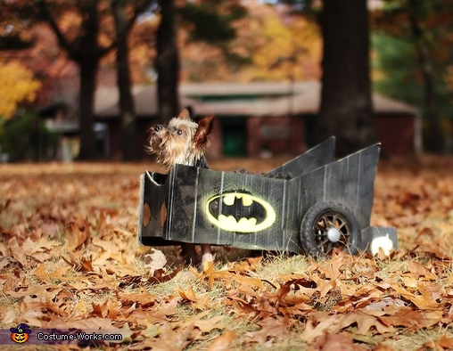 Bat in the Leaves, Batman in Batmobile Dog Costume